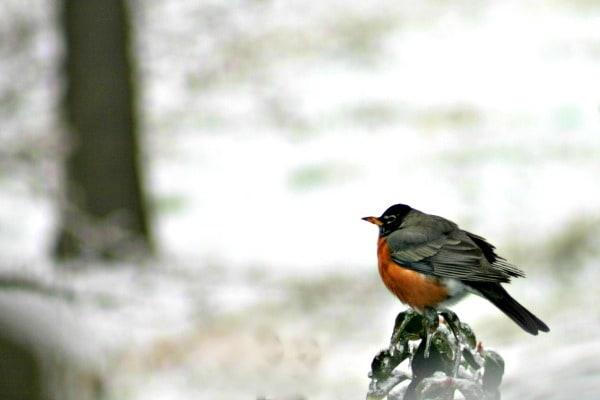 Snowbird   Copyright 2015 Sheila Thigpen