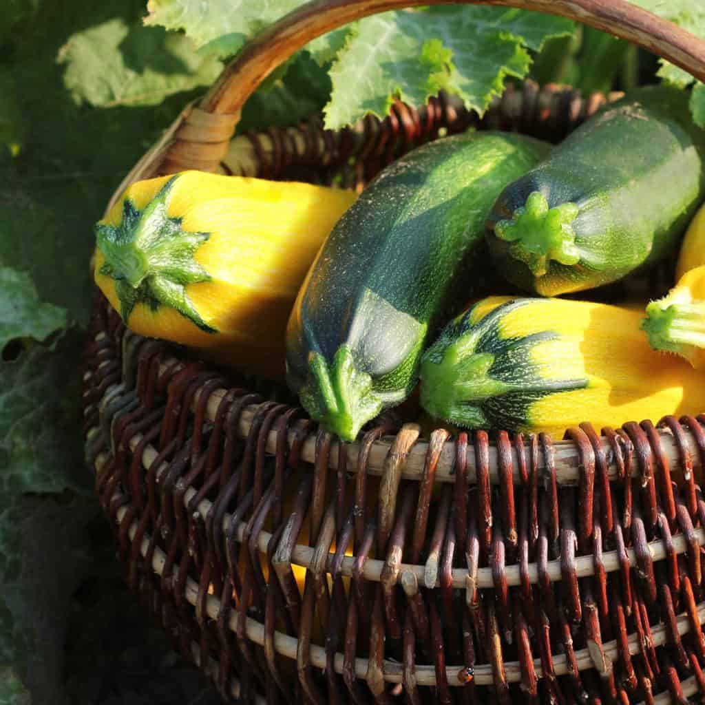 a basket of yellow squash and zucchini